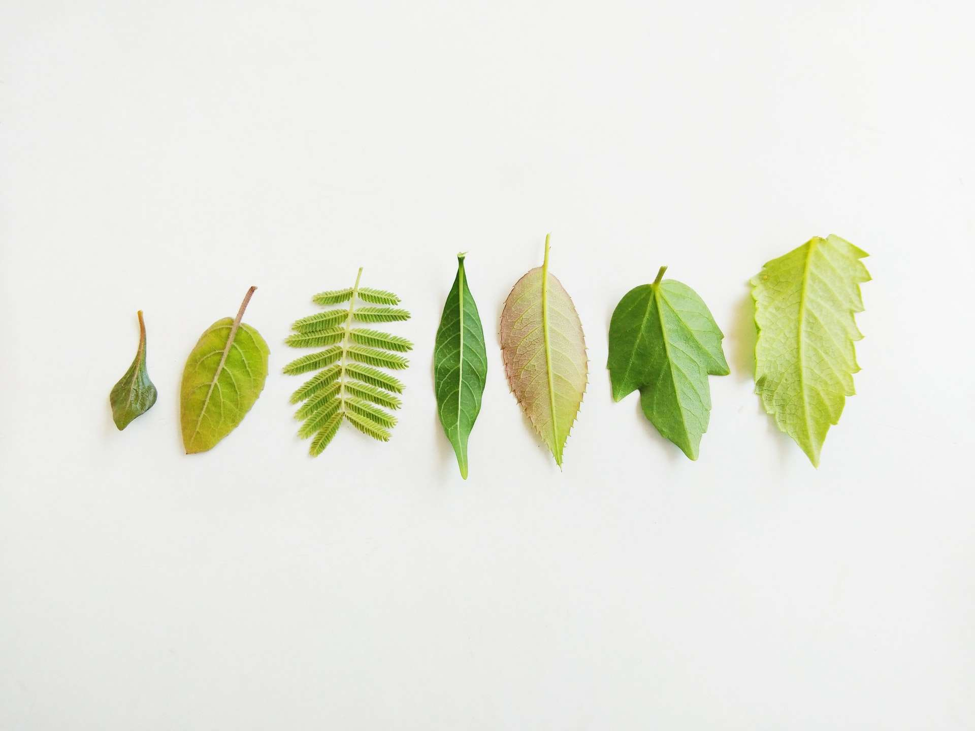 leaf brush illustrator