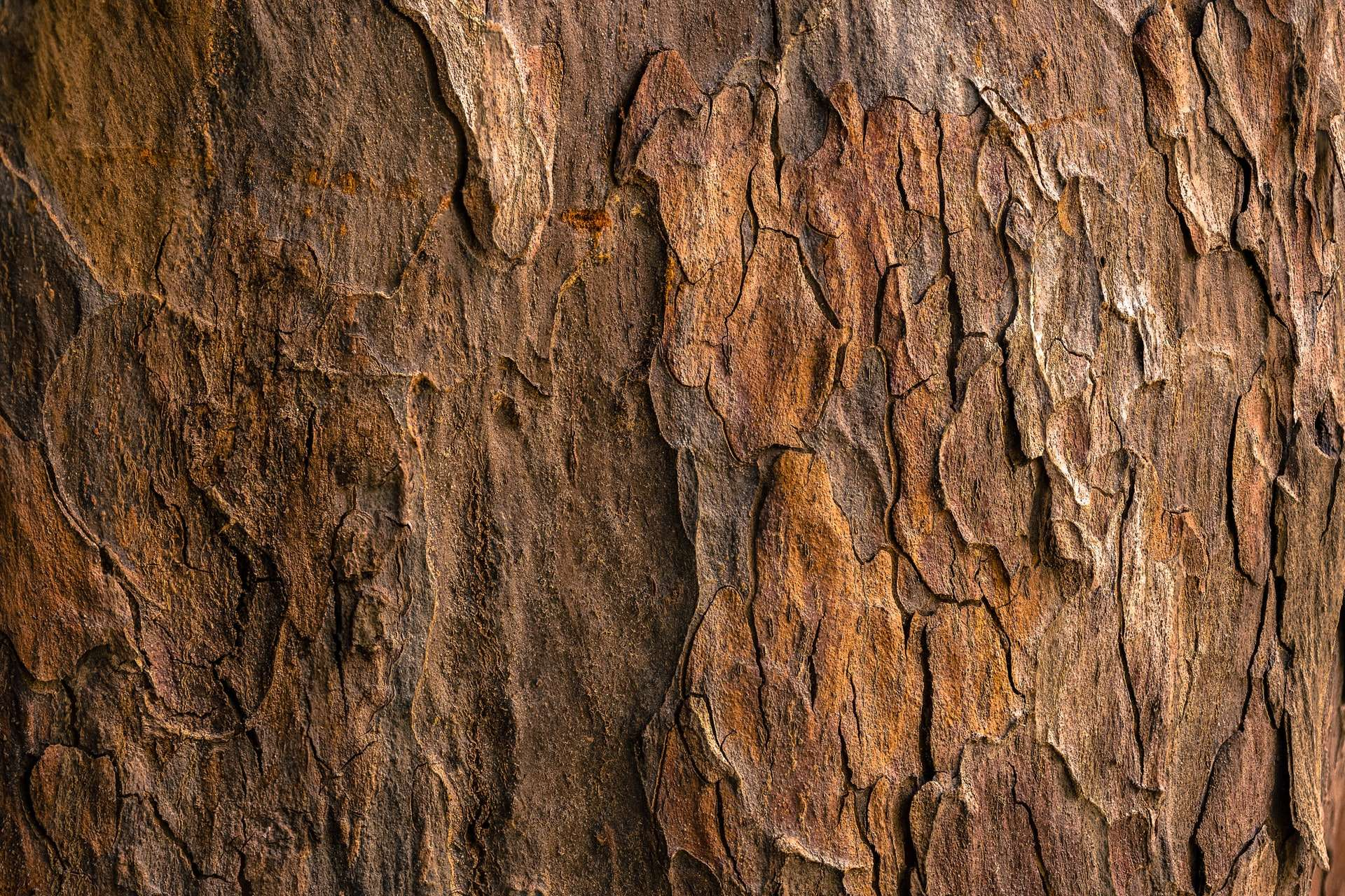 procreate wood texture free